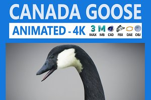 Animated Canada Goose