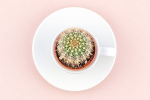 Top view of small cup with decorativ