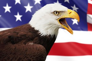 Bald eagle and USA