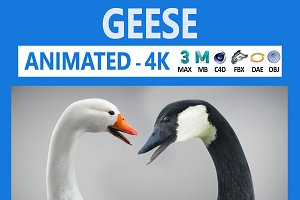 Animated Geese