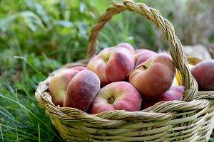 Saturn peaches on cane basket
