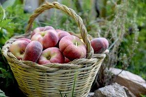 Saturn peaches in basket on grass