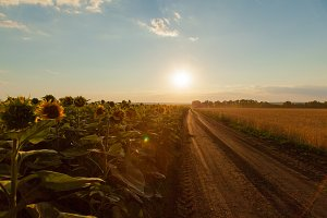 The sunflower fields on the left the