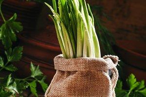 Fresh wild garlic, green sprouts in