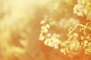 Summer background, grass at sunset,