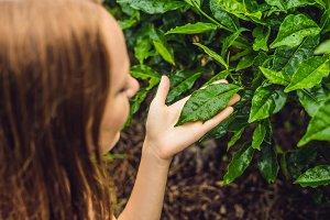 Women tourist at a tea plantation