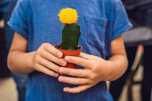 Cactus in the hands of the boy