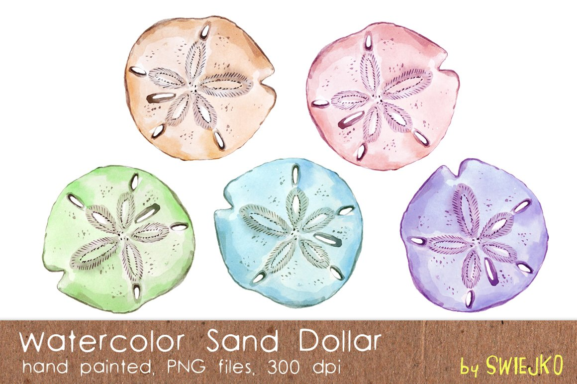 watercolor sand dollar illustrations creative market