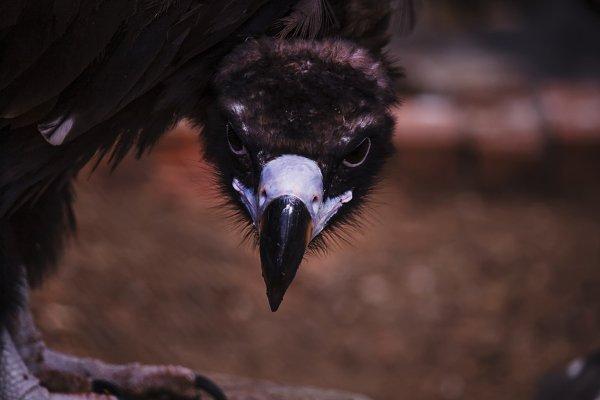 Animal Stock Photos: 5PH - Eagle glance, portrait, selective fo