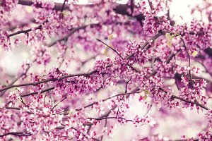 Spring nature background with pink f