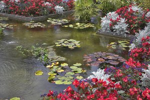 Pond with lilies