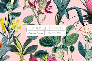 JUNGLE, Exquisite Pattern & More
