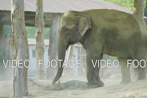 Elephants takes shower of dust in