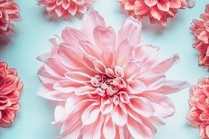 Close up of pastel pink color flower