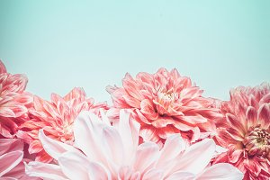 Pink color flowers on turquoise