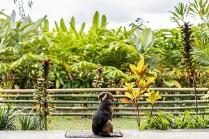 Beagle dog in the tropical garden of