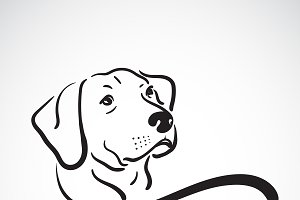 Vector of labrador dog head design.