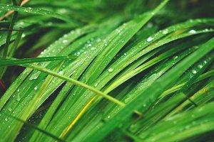 summer wet grass after rain