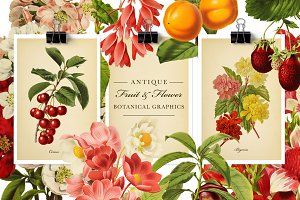 Antique Fruit & Flowers Graphics