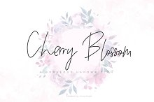 Cherry Blossom Script by  in Script Fonts