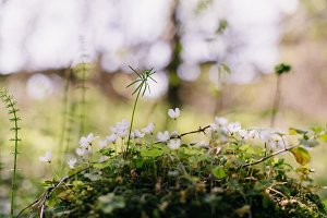 white spring flowers on the edge