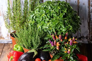 Fresh organic herbs and vegetables s