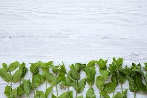 Fresh mint on white wooden
