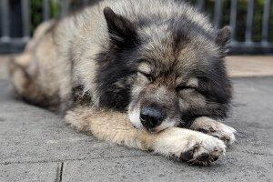 Too Doggone Tired