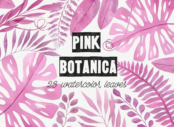 Pink Botanica. Watercolor clipart in Illustrations