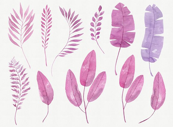 Pink Botanica. Watercolor clipart in Illustrations - product preview 1
