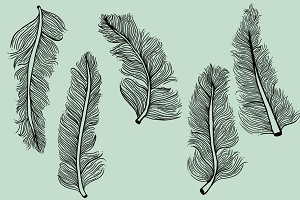 5 Illustrated Feathers