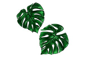 Green monstera palm ink art vector