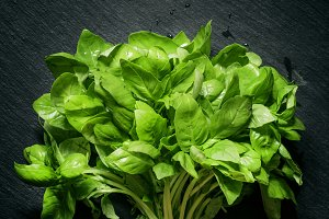 Fresh green basil on a dark backgrou