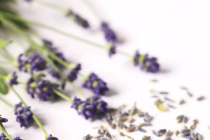 Dried and fresh lavender flowers on