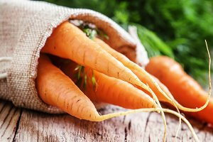 Harvest of carrots in a canvas bag,