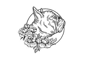 Bulldog animal engraving vector