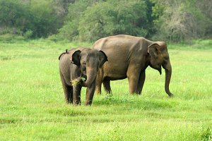 Elephants in National Park