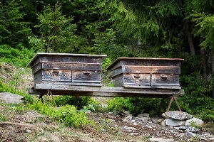 Old bee hives in forest
