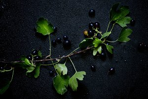 Black currants on branch, dark backg