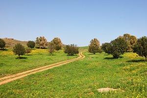 The rural footpath crosses a meadow