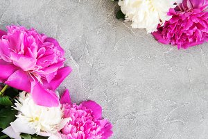 beautiful pink and white peony flowe