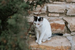 Cute kitty on old brick stairs
