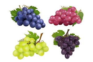 Realistic grapes. Vector set of
