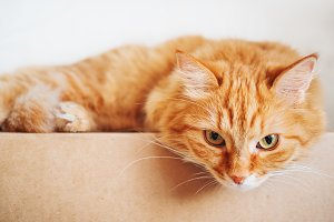 Cute ginger cat on carton box