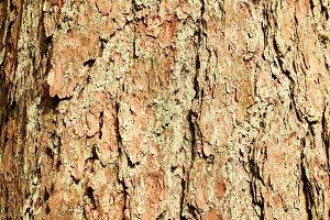 Tree Bark Background Texture