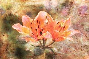 Lily flower. Vintage floral card.