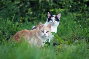 Stray cats in the grass. Portrait of