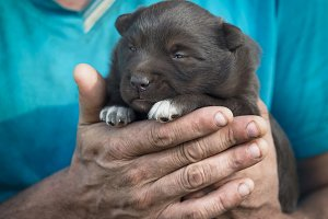 Newborn puppy in the hands of a