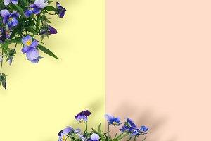 Wild violet flower bouquet on pastel