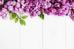 Spring acacia flowers